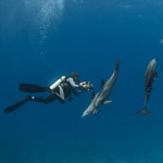 Dolphins and Diver